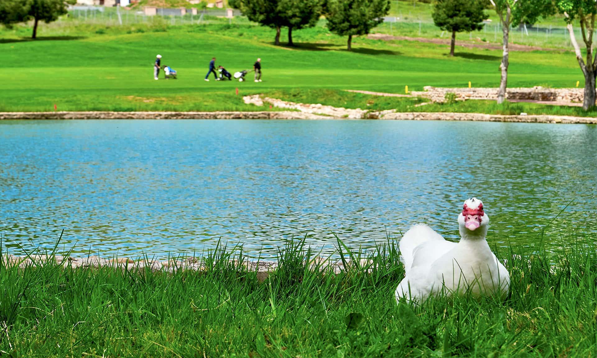 lagos green sire golf cabanillas